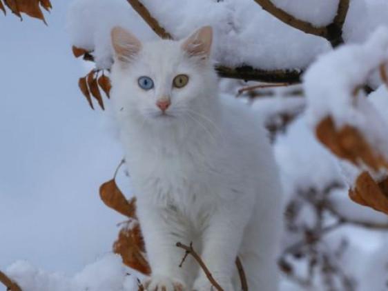 Прогноз погоди у Маневичах на 12 грудня