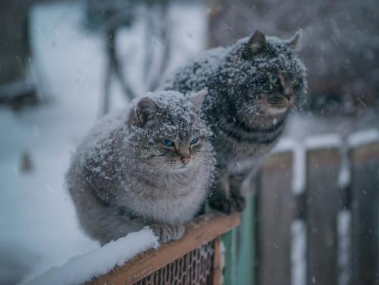 Прогноз погоди у Маневичах на 27 грудня