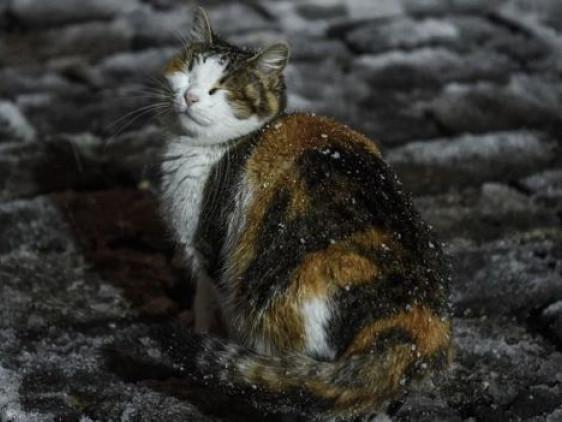 Прогноз погоди у Маневичах на 28 грудня