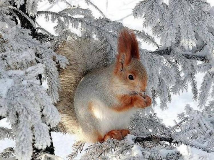 Прогноз погоди у Маневичах на 4 січня