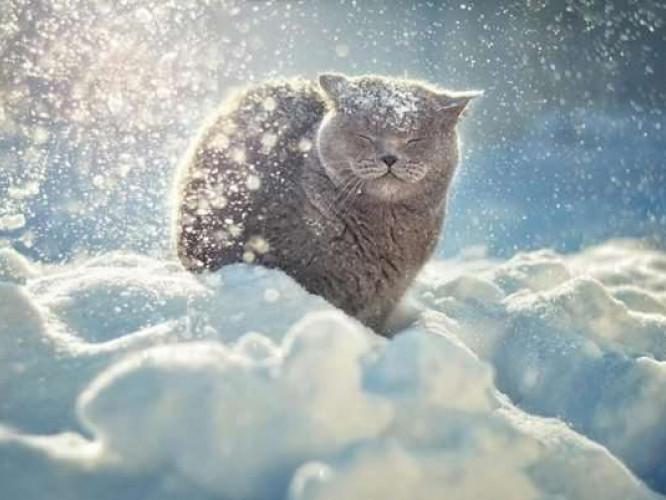 Прогноз погоди у Маневичах на 5 січня