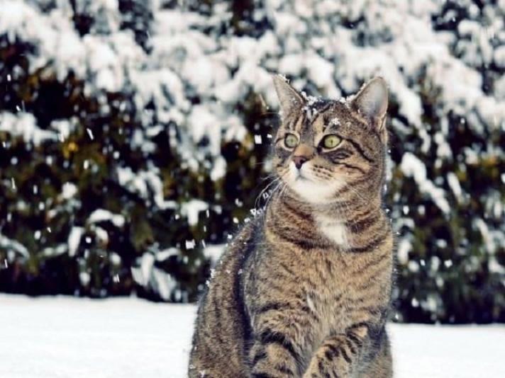 Прогноз погоди у Маневичах на 9 січня