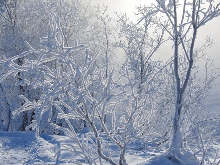 Прогноз погоди у Маневичах на 11 січня