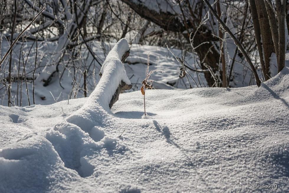 Зимовий Стир