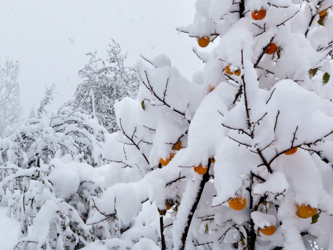 Прогноз погоди у Маневичах на 15 січня