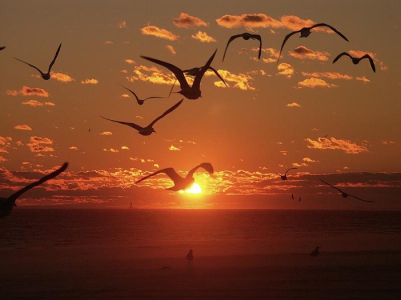 Вірш Павла Мельника з Маневиччини: «Летять птахами вдаль мої літа»