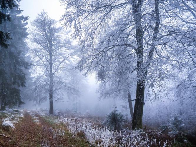 Прогноз погоди у Маневичах на 15 лютого