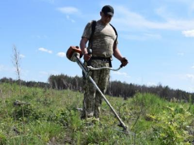 Як у «Маневицькому ЛГ» доглядають за лісовими культурами