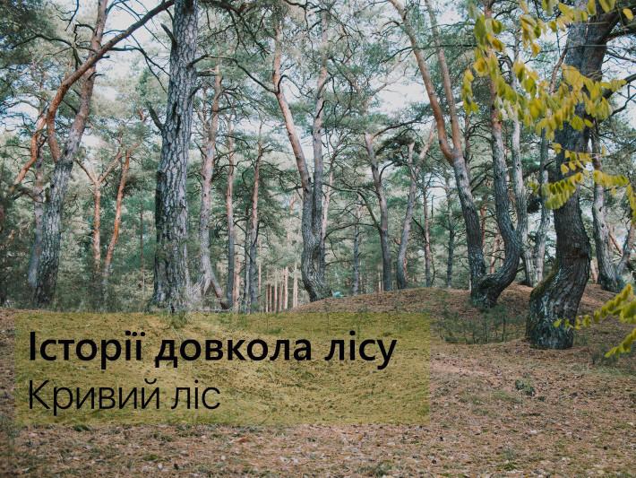 Кривий ліс – урочище на околиці селища Колки, Маневицького району