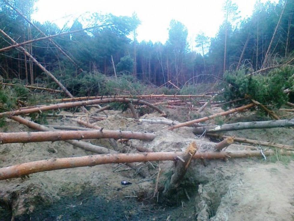 Майже півтора десятка гектарів лісу вщент перекопали лопатами і понищили помпами