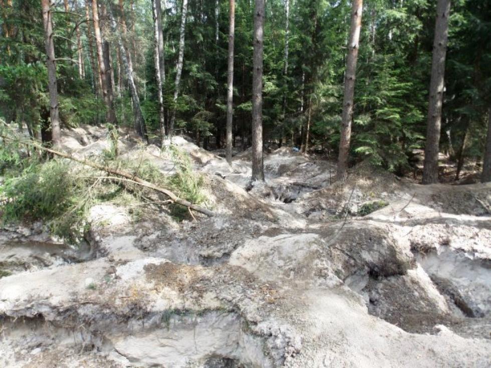 Понад чотири роки тому ліси Маневицького району потерпали від навали охочих нажитися на «сонячному» камінні – бурштині.